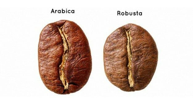 coffee beans side-by-side