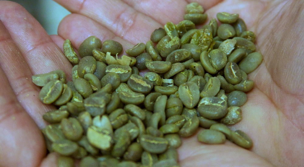 Raw Coffee Beans (Green)